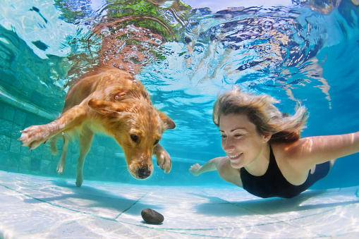 Furry Four Legged Children Who Benefit From Swimming Pools