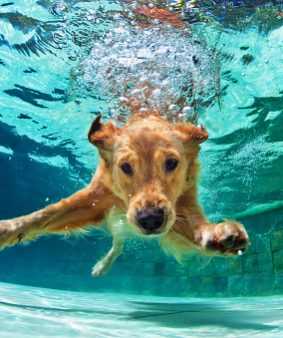 Pool Days for Dogs in these Dog Days of Summer